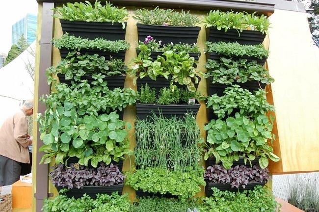 вертикальный огород у стены дома