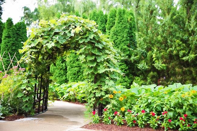 арка из вьющихся растений
