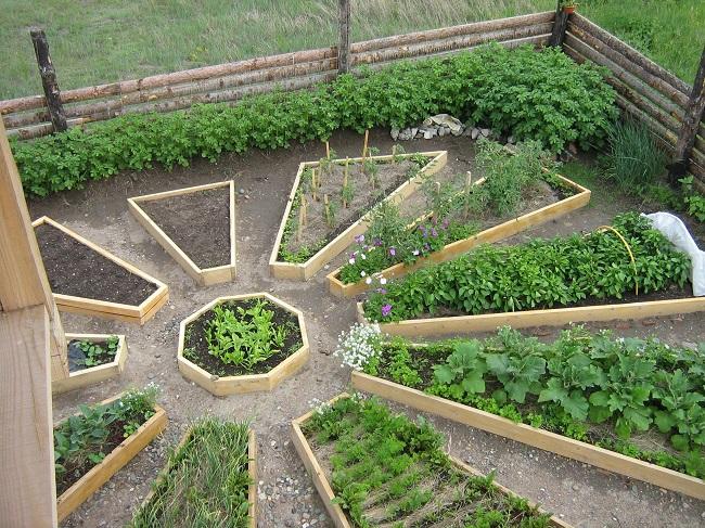 овощи в декоративном огороде