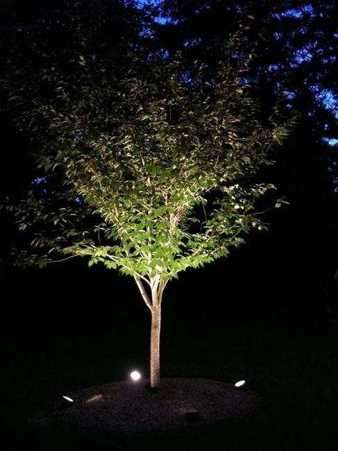 многоплановая подсветка дерева