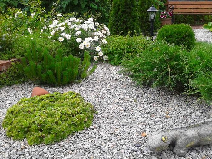 гравиный сад в ландшафтном дизайне