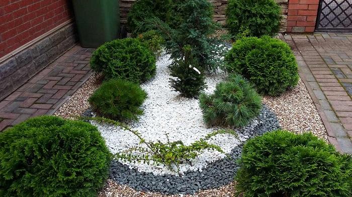 гравийный сад с хвойниками