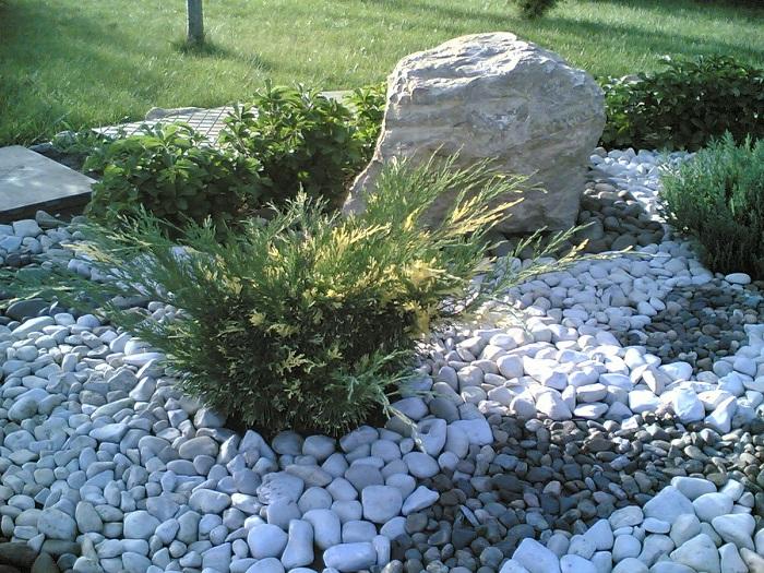можжевельник в саду камней