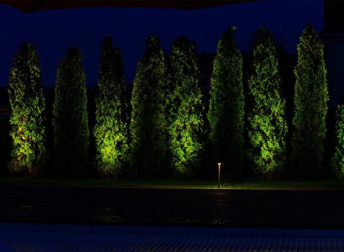 Силуэтное подсвечивание деревьев