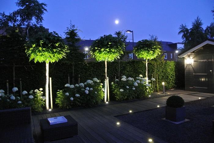 красивая подсветка декоративных деревьев