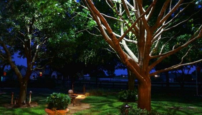 подсветка деревьев сверху
