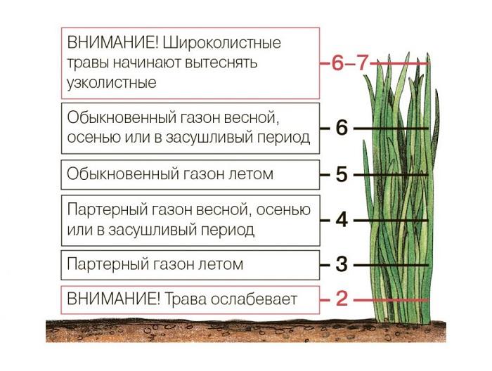 высота стрижки газона