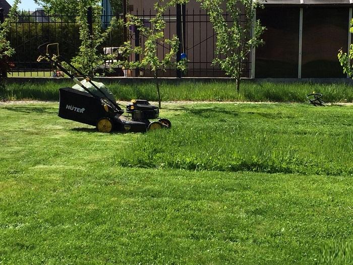 первая стрижка газона весной