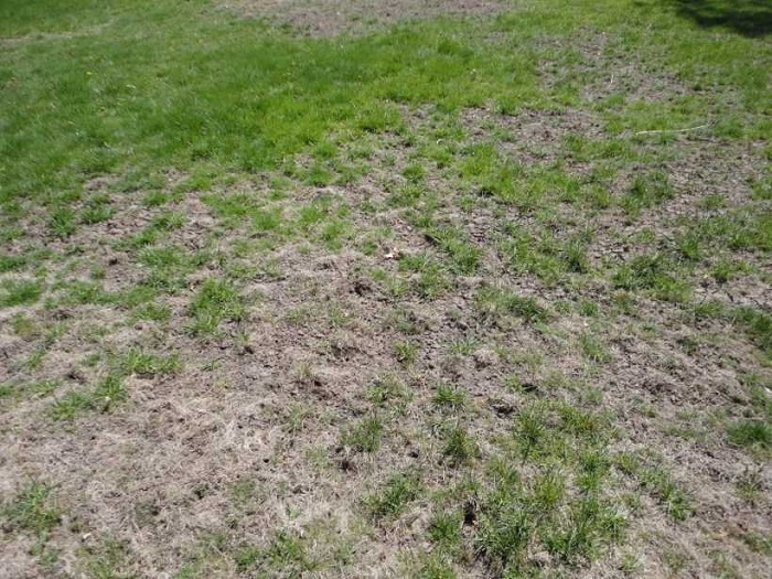 поврежденный газон