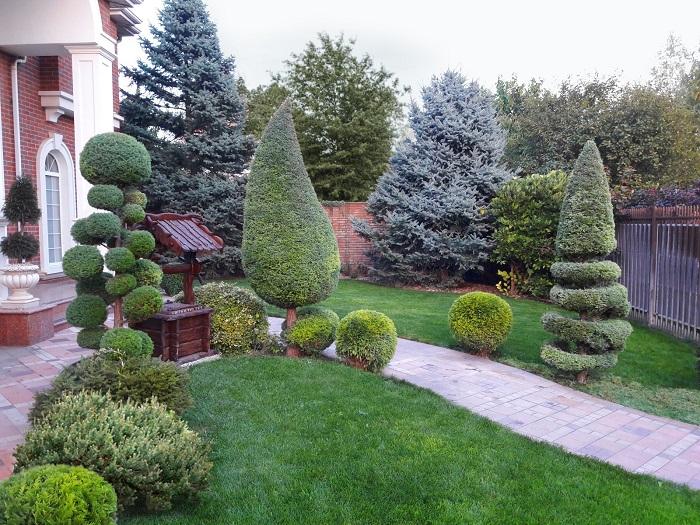 топиарная стрижка кустарников и деревьев